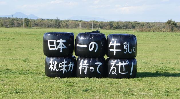 【攻略】別海町パイロットマラソン 日本一の牛乳飲みに行こう